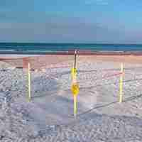 Turtle nest protection